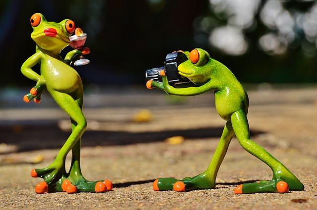 frog-881654_640