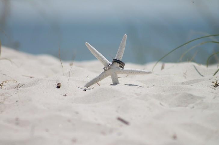 starfish-183313_960_720
