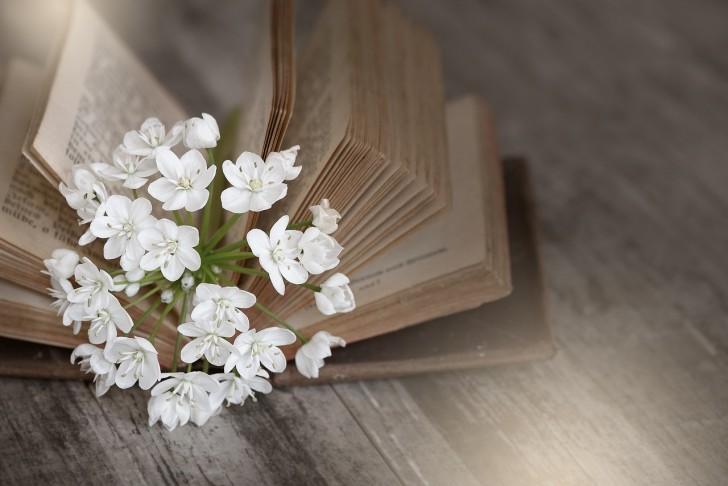 book-1356337_1280