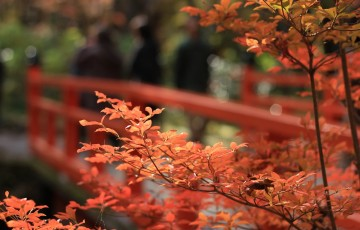 autumnal-leaves-1698035_1280