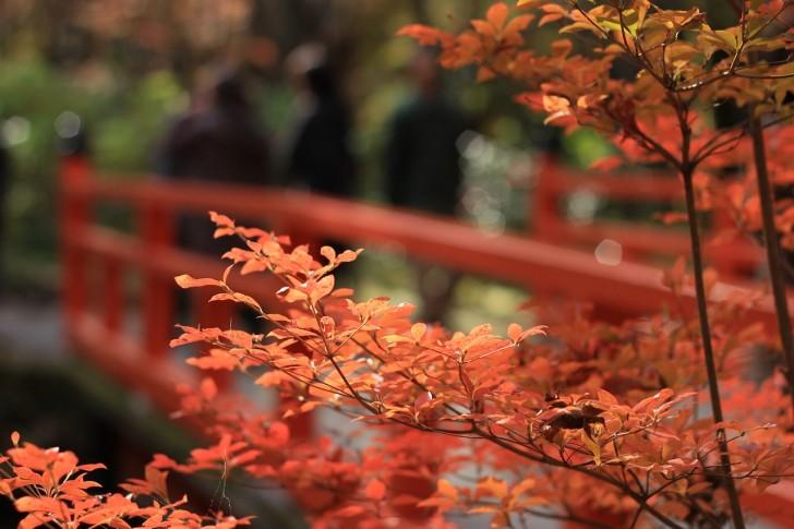 autumnal-leaves-1698035_1280