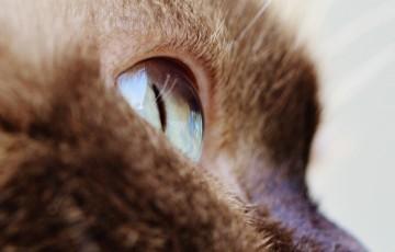 cat-1378362_1280